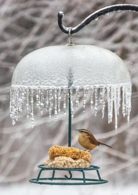 Jeges madáretető tető
