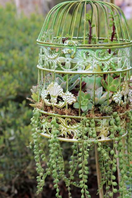 Pozsgás növények madárkalitkában