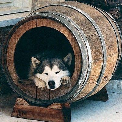 Kutyaól régi hordóból