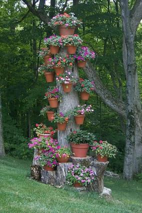 Kivágott fa törzse virágba borulva