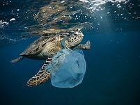 Turtle Plastic-Aula BGT.jpg