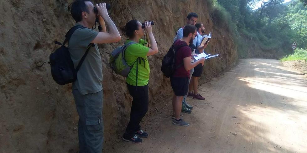 Iniciació a l'observació d'ocells a la Serralada Litoral - Sortida de camp (Òrrius)