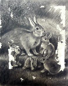 bunnyb4.jpg