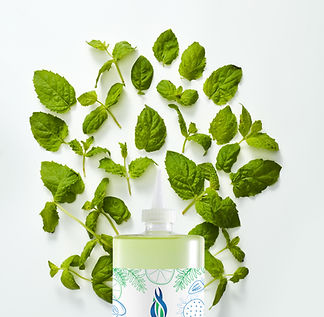 00676235012516 - Mint Syrup S - Infusion