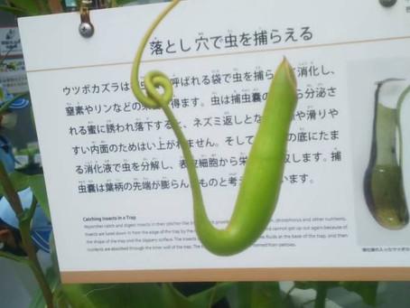 2021/5/30 隊集会 筑波実験植物園見学