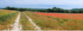 Open meadow of flowers with a dirt road
