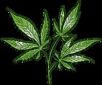 Greenplant.png