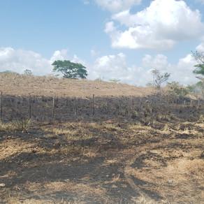 Salvemos Panama - Detengamos los Fuegos