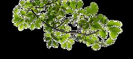 tree-branch-clip-art-tree-branch-transpa