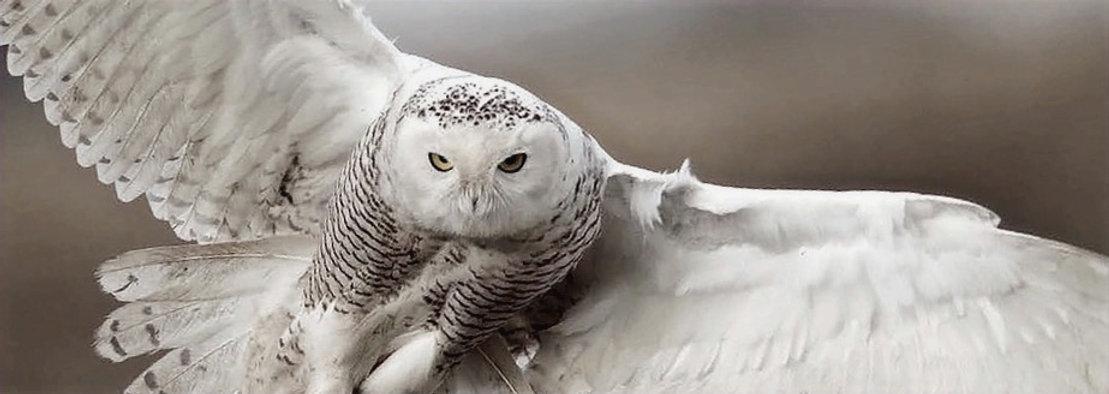 OWL WHITE _edited_edited_edited.jpg