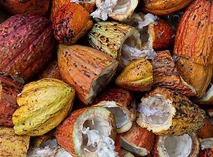 gqsp-peru-bpm-cacao.jpg