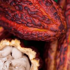 gqsp-peru-webinar-cacao.png