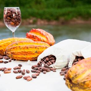 gqsp-peru-cacao.png