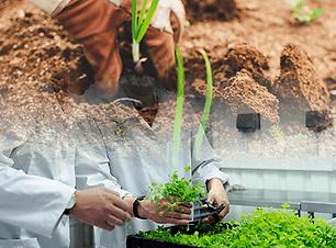 gqsp-peru-innovacion-agraria-1.png