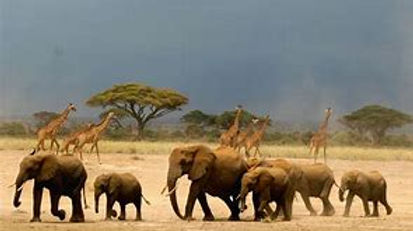 giraffe n elephant.jpg