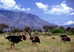Kidepo-Valley-National-Park1-150x105.jpg