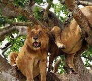 QE Lions.jpg