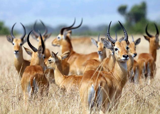 QE Deers.jpg