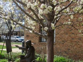Pleasant Spring in Pleasanton