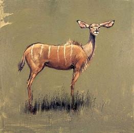 NAMIBIE, Kudu