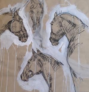 ZINGARO, Etude de chevaux