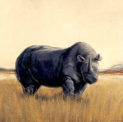 NAMIBIE, Rhino