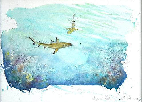 Polynésie, Requins citron à Bora Bora (50 x 40 cm)