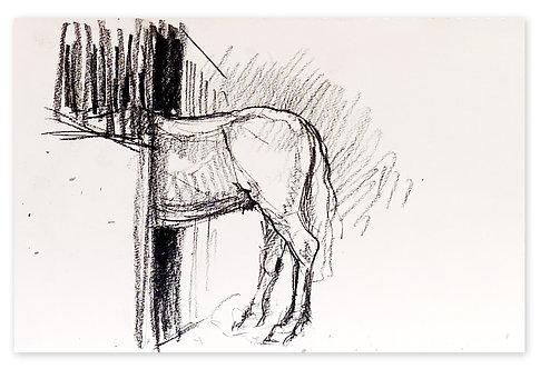 Zingaro, Etude cheval à l'écurie (21 x 30 cm)