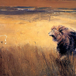 NAMIBIE, Lion