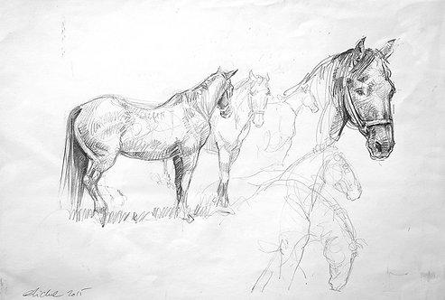 Etude de cheval
