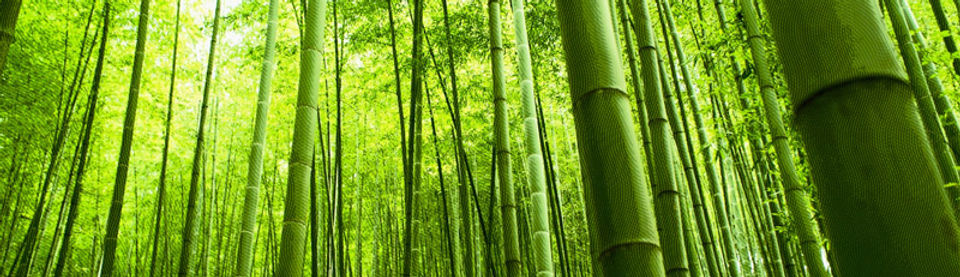 bamboo-forest-engrave.jpg