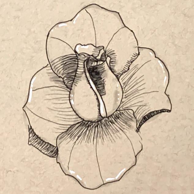 Rose-Quick Sketch