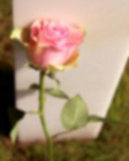 Fallen Rose.jpg