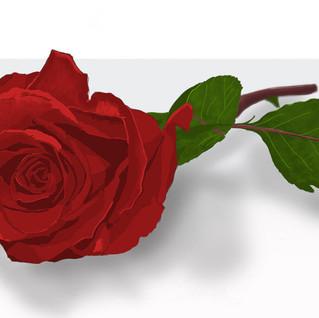 Still Life Rose