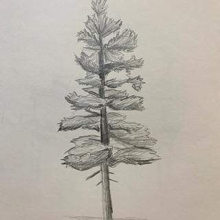 Simple Pine Tree