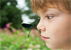 boybug.png