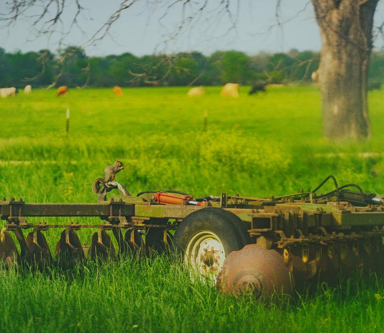 BMP01558.jpg