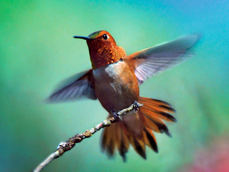 """Be like a bird... finding your energetic """"wings"""" as an antidote to anxiety."""