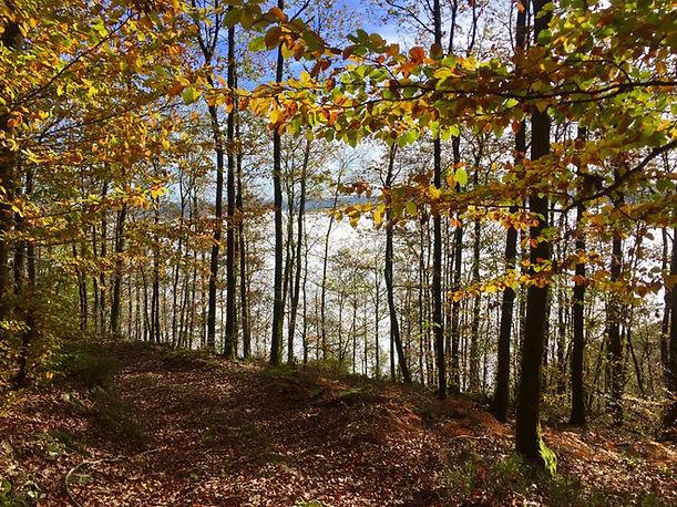 forêt Oignies.jpg