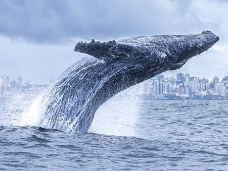 Morte acidental de animais marinhos na orla de SC tem como causa principal uso de redes ilegais