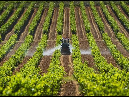Produção agrícola: estimativa de junho prevê safra recorde de 247,4 milhões de toneladas
