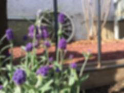 copain de garden コパンデガーデン 福島市 ナチュラル アンティーク ラベンダー