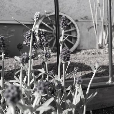 ナチュラルな風が吹く庭