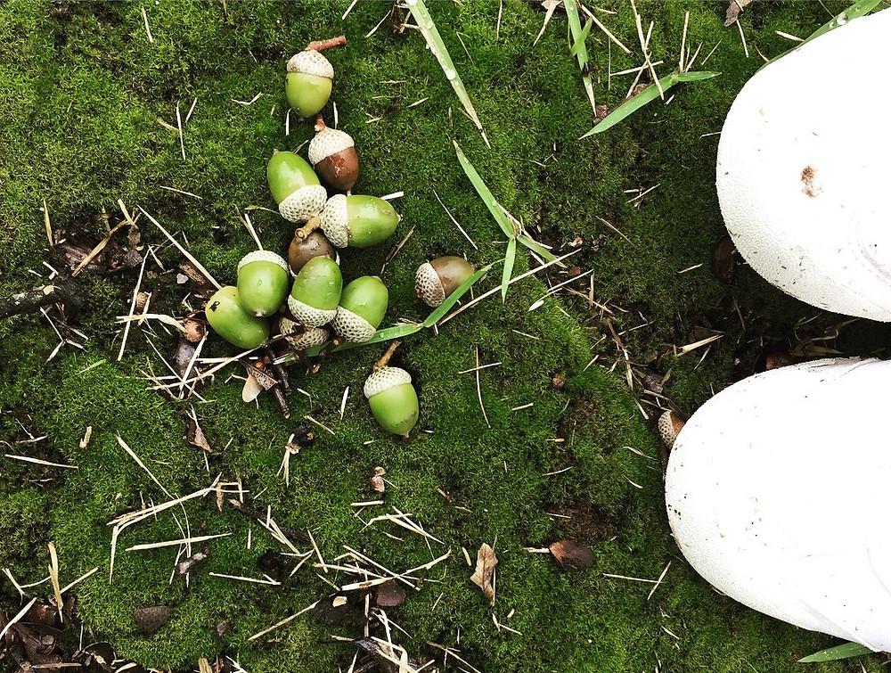 秋 どんぐり 苔 コパンデガーデン copain-de-garden