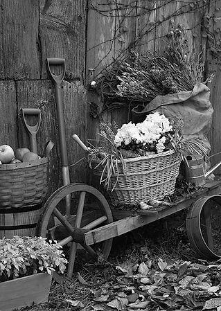 copin de garden コパンデガーデン 福島県 福島市 花 雑貨