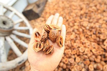 copain de garden コパンデガーデン 福島市 胡桃って本当に可愛い!  それとくるみのうえを歩いた時の音もなんとも言えず・・・いい感じです!  ナチュラルガーデンにはぴったりですね。 