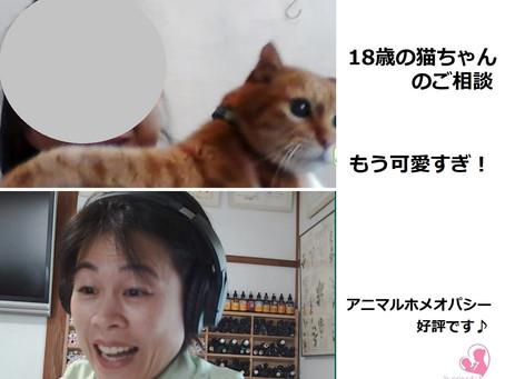 「この猫ちゃんは私の人生」