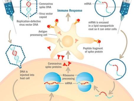 SARS-CoV-2ワクチンを理解する