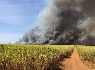 Incêndios aumentam e trazem prejuízos para o campo