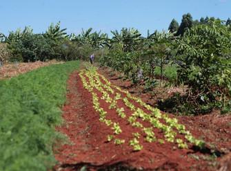 Mais de 37 mil produtores serão beneficiados em junho com o programa Garantia-Safra